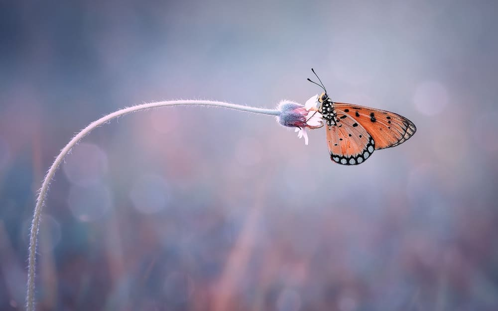 macrophotography image with butterfly and bokeh effect in background